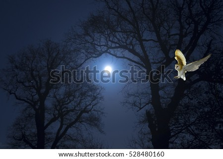 Stock Photo Barn Owl hunting for rodents and moonlight night December