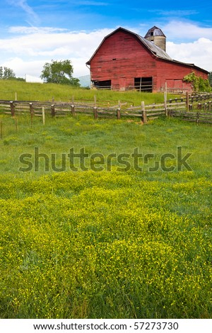 Barn surrounded by field of buttercups
