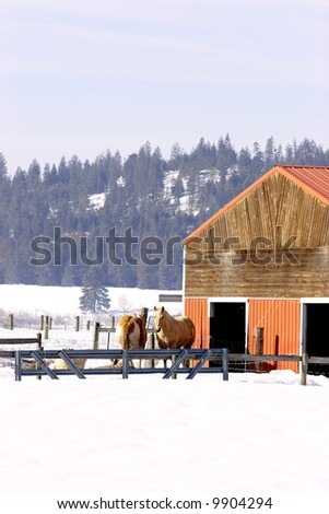 Barnyard animals share a pen in winter.