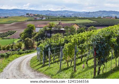 barolo vineyards Italy Piemonte #1241166556