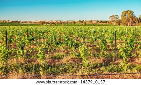 Barossa Valley wineries near Lyndoch, South Australia  #1437910157