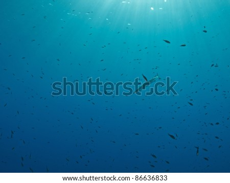 Barracuda and damsel fishes