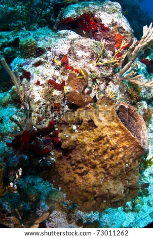 Barrel sponge surrounded by gorgonians with bicolored damsel fish.