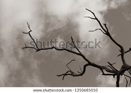 Barren dry dead tree for hopeless pain and agony concept.  Destruction and despair in a hot dry place with hot sun.  Aged dead tree.