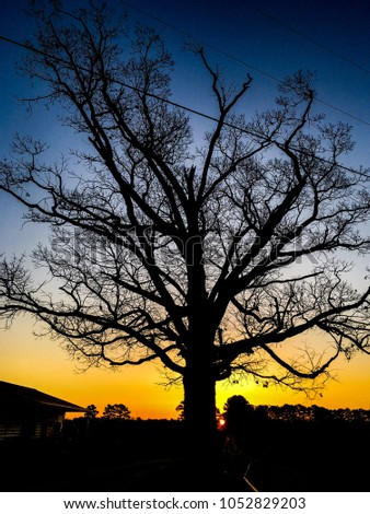 Barren mighty oak tree silhouetted by a beautiful golden sunrise on a clear morning in the country in North Carolina. Wake County. #1052829203