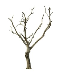 Barren tree on isolated background.