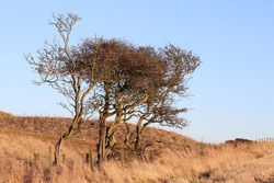 Barren trees against barren landscape and blue sky