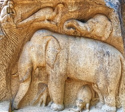 Bas relief ancient stone carvings of historical animal sculptures of Elephant family, Peacock, Monkey carved on the cave temples at Mahabalipuram, Tamilnadu. Monolithic stone relief carving sculptures