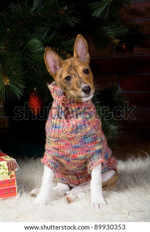 Basenji puppy with christmass-tree decorations.