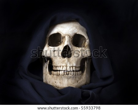 Basic human skull photographed indoors.