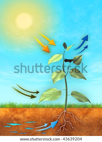 Basic photosynthesis process: water, carbon dioxide and light are used to produce oxygen and sugar. Digital illustration.