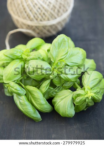 Basil Herb Fresh and Aromatic, Freshly Picked Raw Basil Bunch