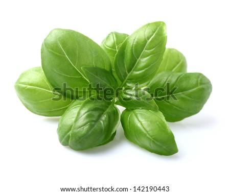 Basil leaves in closeup #142190443