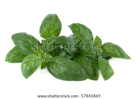 Basil leaves in front of white background - stock photo