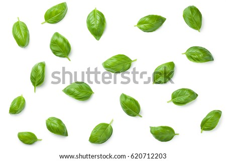 Basil leaves isolated on white background. Top view. Flat lay