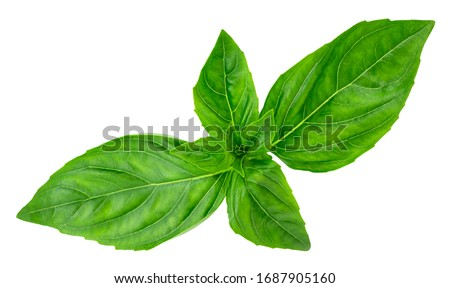 basil leaves isolated on white background with clipping path. Foto d'archivio ©