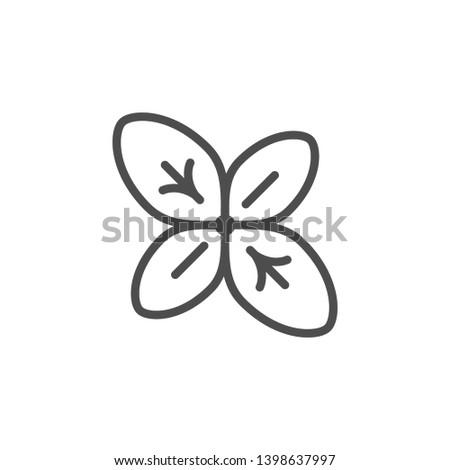 Basil line icon isolated on white