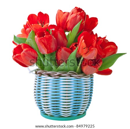 Basket for flowers full of red tulips isolated on white