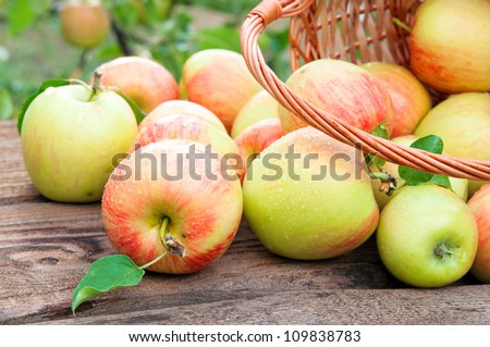 Basket full of ripe apples against apple orchard