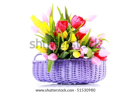 basket full of tulips on white - flowers and plants