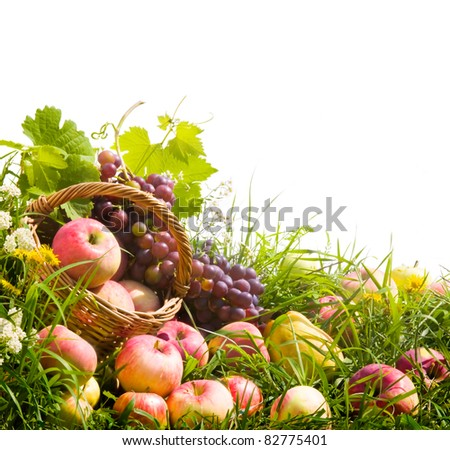 basket of apples and grapes on the green grass