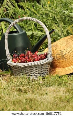 basket of cherries and straw hat in a flower garden