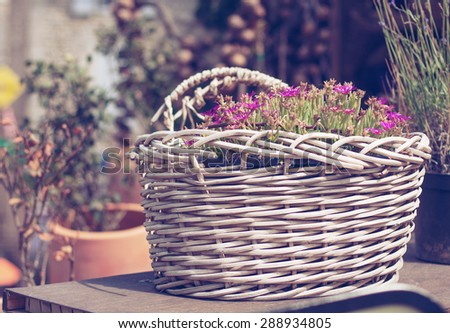 Basket of flowers in Provence