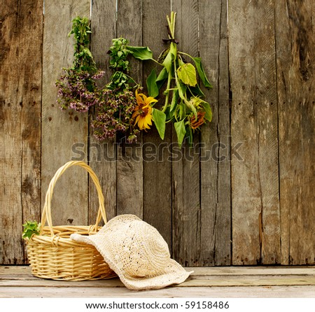 Basket of fresh cut oregano, a gardener's straw hat and herbs and sunflowers hung to dry on a rustic barn background.