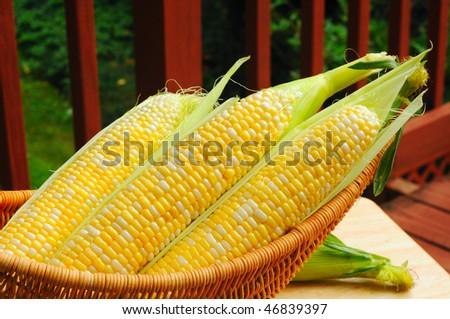 Basket of fresh sweetcorn on a backyard deck