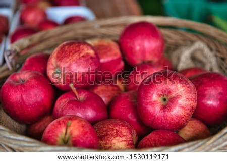 Basket of freshly picked red apples at the farm