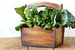 basket of leafy greens - spinach, beet leaves, kale, collard greens.