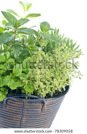 Basket of Mixed Fresh Herbs Isolated on White
