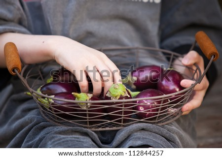 Basket of small eggplants, holding by kid hands