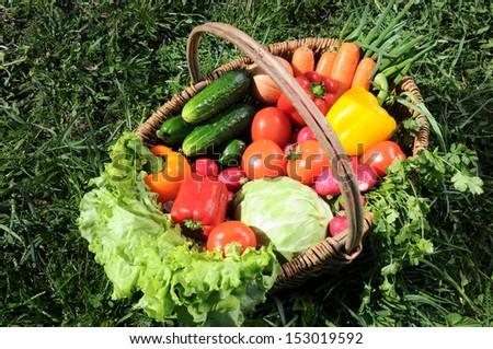 basket of vegetables #153019592