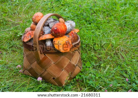 basket on grass, full of fresh autumn mushrooms - stock photo