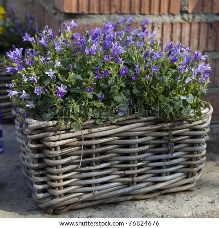 Basket with  bluebells flowers