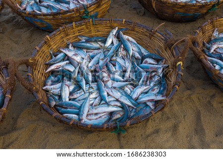 Photo of  Basket with caught fish close-up. Fish Market in Negombo, Sri Lanka