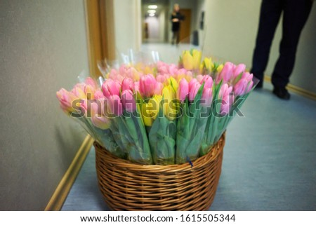 Basket with colorful bouquets of tulips on white background Stock photo ©