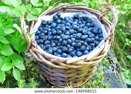 basket with fresh blueberries from the forest,fresh ripe berries and dessert ingredient