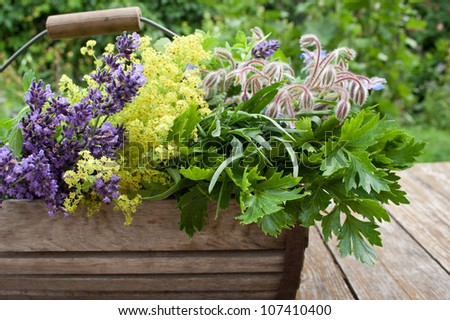 basket with herbs/herbs/summer