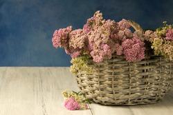 Basket with medicinal herb pink yarrow.