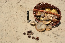 Basket with mushrooms and a knife in the sand