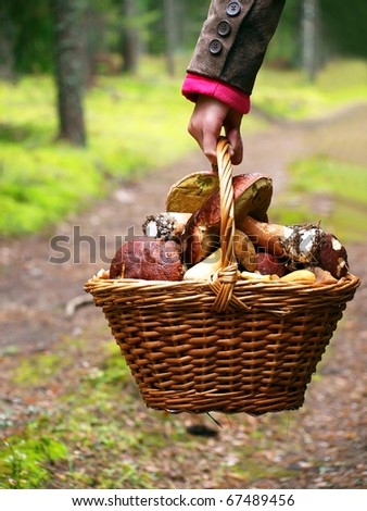 Basket with mushrooms in girl hand