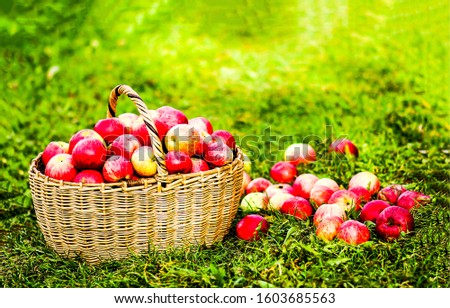 Basket with red apples on grass. Red apples in basket. Basket with apples. Apples basket