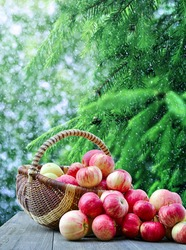 Basket with red apples on wooden table on background of a winter landscape. Special toning