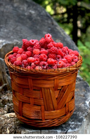 basket with ripe and healthy raspberries  from the woods