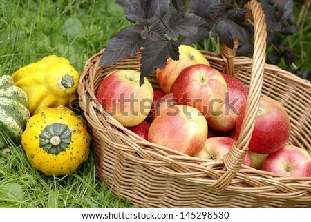 Basketful with apples and gourds in the garden.