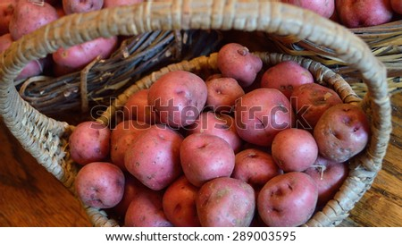 Baskets full of fresh new potatoes, locally grown in Florida. Fresh produce in baskets, red-skinned new potatoes, raw with skins still on.