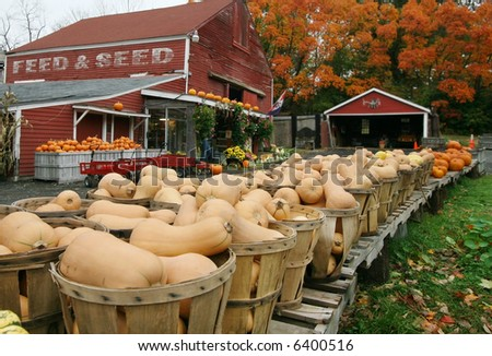 baskets of squash in foreground of farm stand