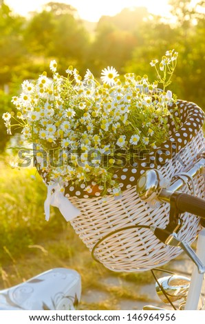 Baskets with daisies at sunset  #146964956
